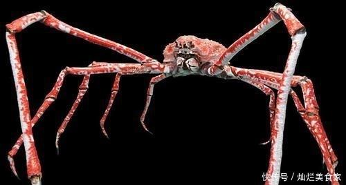 最大的 螃蟹, 体型是普通螃蟹的几十倍之大,以鲨鱼为食物