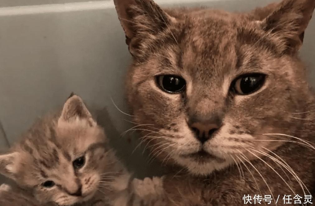 好心人在野外拯救了猫咪母子,被救助后,猫妈妈抱着孩子流出泪水