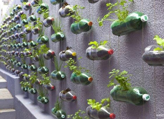 """塑料瓶植物景观墙的做法(图2)  塑料瓶植物景观墙的做法(图4)  塑料瓶植物景观墙的做法(图7)  塑料瓶植物景观墙的做法(图9)  塑料瓶植物景观墙的做法(图11)  塑料瓶植物景观墙的做法(图13) 为了解决用户可能碰到关于""""塑料瓶植物景观墙的做法""""相关的问题,突袭网经过收集整理为用户提供相关的解决办法,请注意,解决办法仅供参考,不代表本网同意其意见,如有任何问题请与本网联系。""""塑料瓶植物景观墙的做法""""相关的详细问题如下: ===========突袭网收集的解决方案如下=========="""