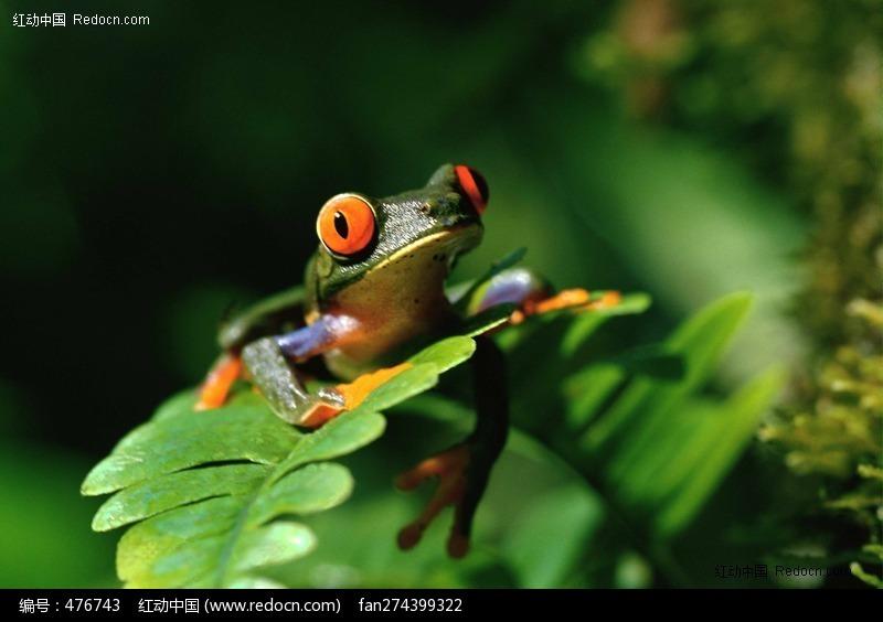 可爱的树蛙美术画画