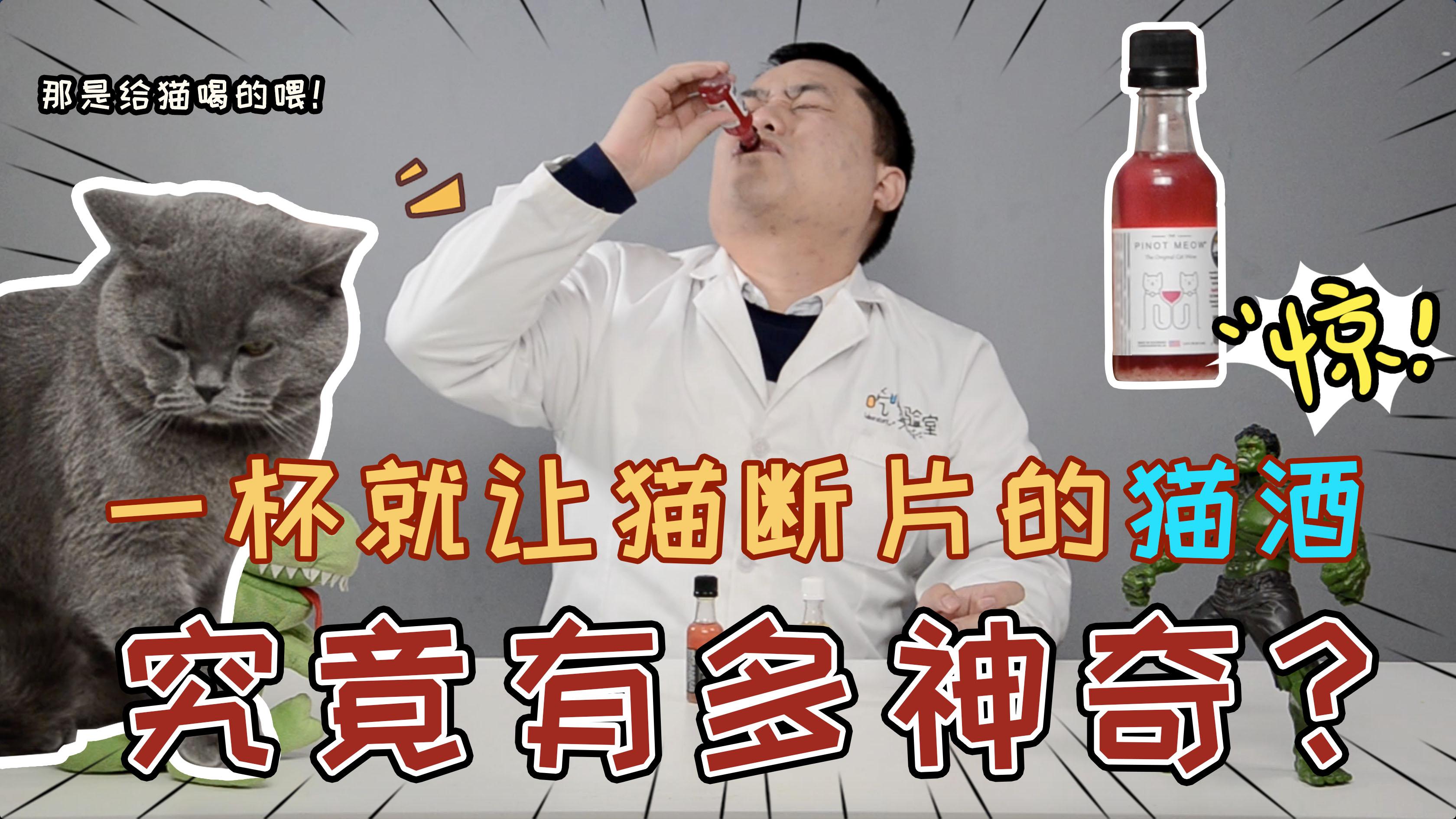 试喝一杯就让猫咪断片的神秘猫酒,究竟是什么味道?